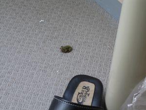 frog2108a.jpg