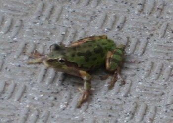 frog2108b.jpg